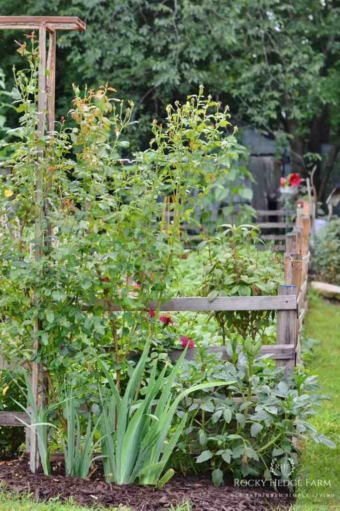 A Beautiful Vegetable Garden