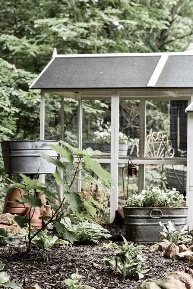 Landscape Gardening around a Backyard Chicken Coop