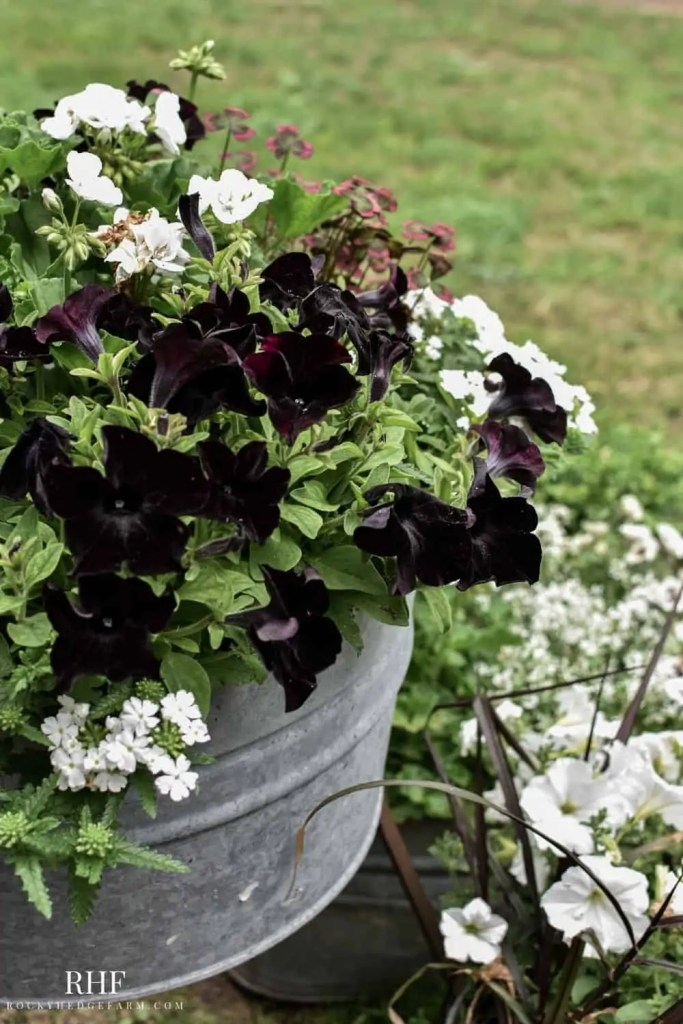 galvanized washtub planter ideas