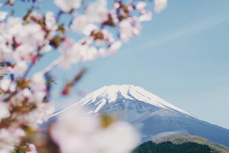 2019 年日本櫻花開花時間 由日本氣象公布的專業預測 9