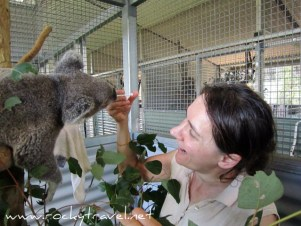 Koalafeeding Wildlife Hospital