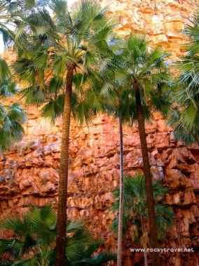 El Questro Gorge Palms