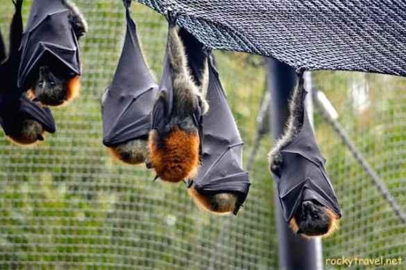 Healesville Sanctuary Wildlife