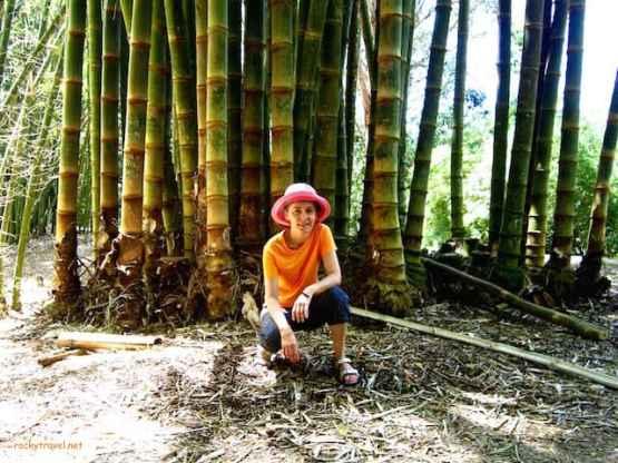 Cairns The Centenary Lakes - the Rainforest Boardwalk
