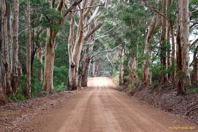 A road trip across the Southern Forests