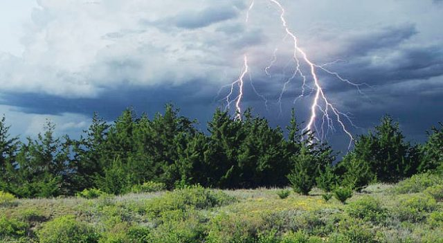 Lightning and cedar trees