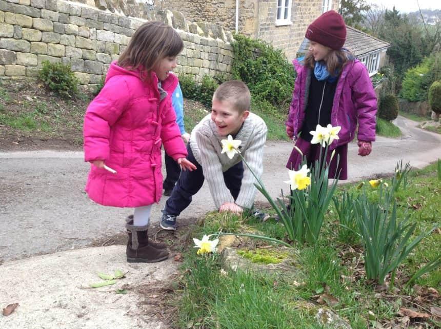 livewires daffodils