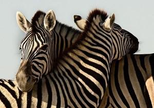 amor-animal