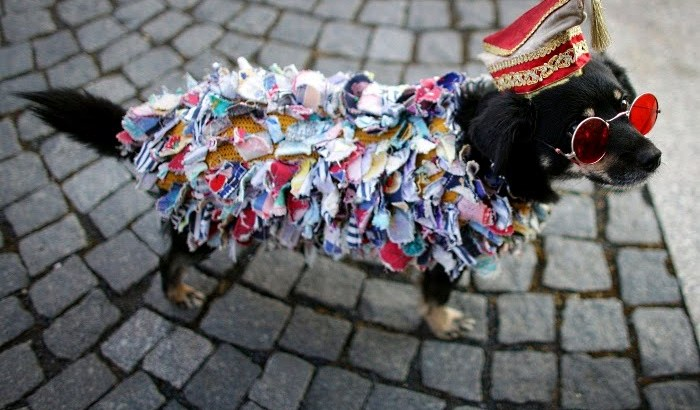 Dog_Folia