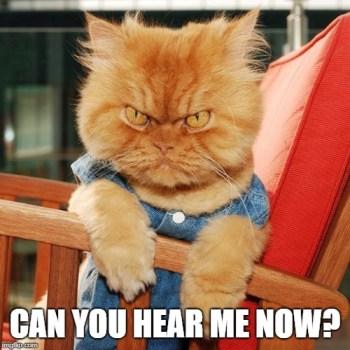 Angry Cat Meme