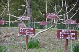 Drzewka upamiętniające gości jednego z Japończyków