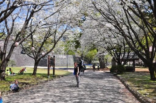 Hanami w Kumamoto