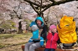 Nara i Hanami
