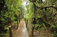 Wedrujac w Parku Narodowym Wulkanu Poas W Parku Narodowym Wulkanu Poas