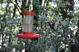 Kolibry w Monteverde
