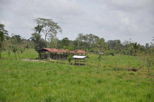 Krajobrazy w drodze do Tortuguero