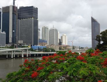 Brisbane kwitnie