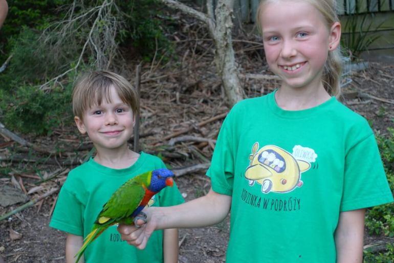 Papugi w Brisbane