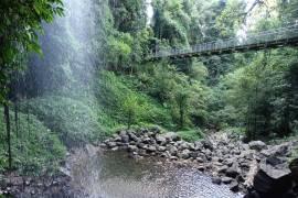 Lasy deszczowe w Australii