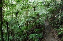 Park Narodowy Lamington