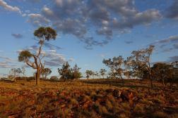 Piękny outback