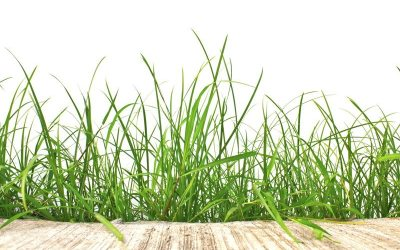10 Tips To Ready Your Lawn For Spring