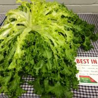 The Best in Show Lettuce