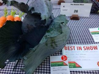 Vivienne's prizewinning cabbage