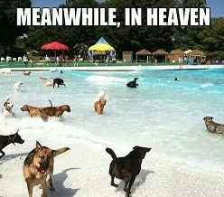 Meanwile in heaven