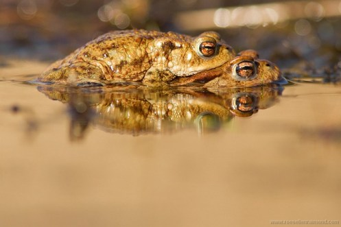 Toad Loving