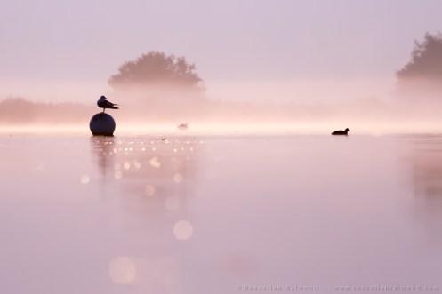 Gull on a foggy summer morning