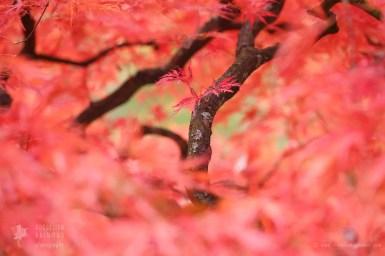 Autumn From the InsideAutumn tree