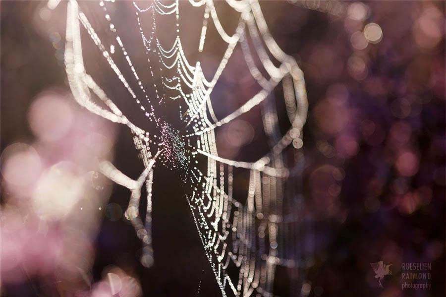 Fine art nature photography cobweb heather