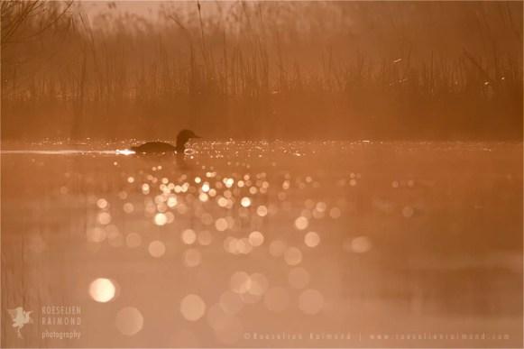 mist fog Netherlands mood water reflections atmosphere sunrise scenery landscape