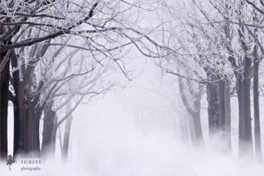 hoar frost winter scenery landscape snow ice cold trees Netherlands mist