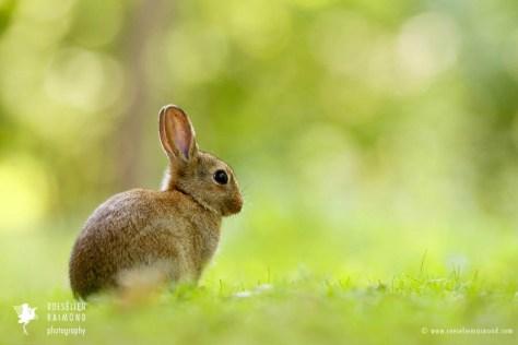 wildlife Leporidae rabbit wild animal