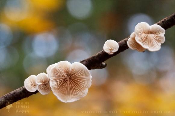 autumn light leafs mood Flower photography atmoshere mushroom bokeh