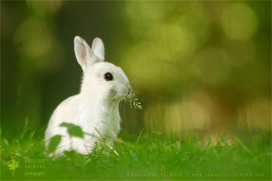wildlife Leporidae rabbit wild animal