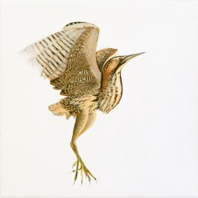 Bittern in the SnowAcrylics on Canvas
