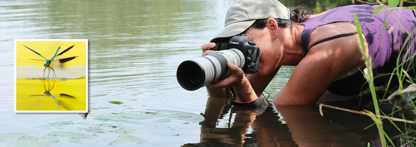 Roeselien capturing a Banded Demoiselle (Calopteryx splendens)