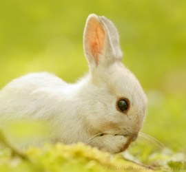 white rabbit bunny cute funny humour