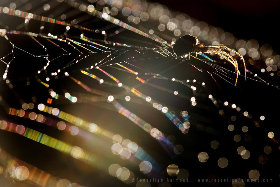 spiderweb_bokeh