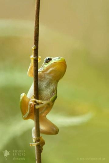 tree frog fine art photography