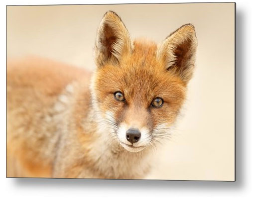 Cute Baby Animals Roeselien Raimond Nature Photography