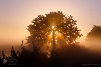 mist sunrise
