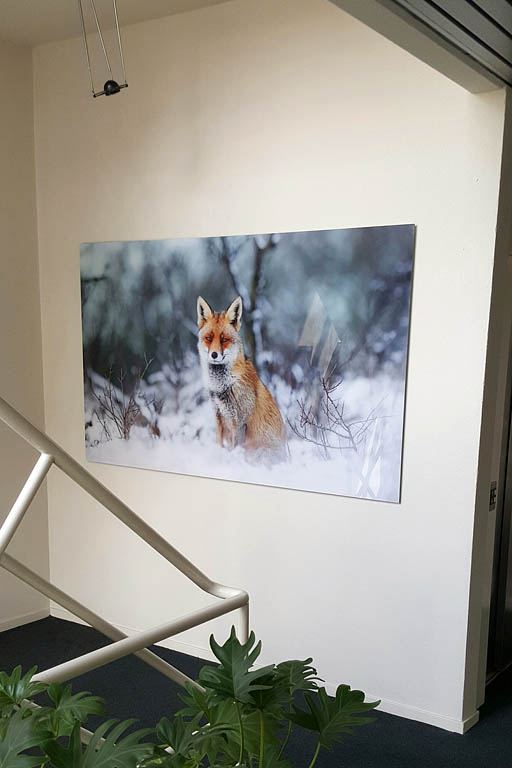Fine-art Wall decoration Fox-It Vos in de sneeuw