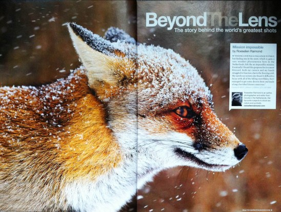Practical photography Fox in the Snow