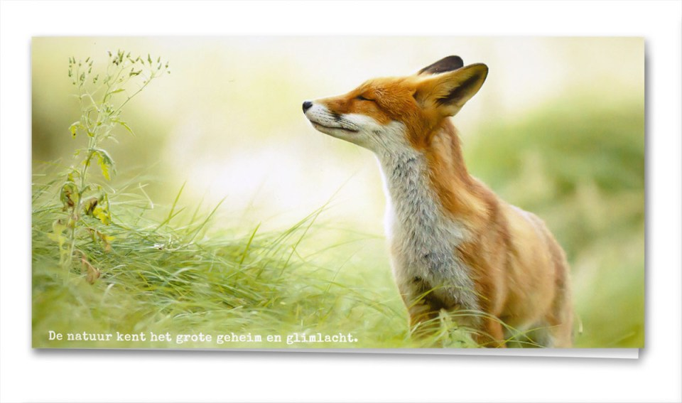 Birth Card Zen Fox