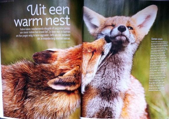 Spread Roots Magazine Vossen