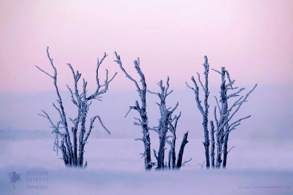 Snowscape at sunrise